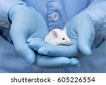 small experimental mouse is on... | Shutterstock . vector #605226554
