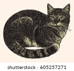 cat. hand drawn engraving.... | Shutterstock .eps vector #605257271