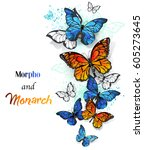 Stock vector flying bright blue morpho and orange monarch butterflies on white background 605273645