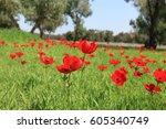 red flowers spring tender... | Shutterstock . vector #605340749