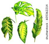 tropical hawaii leaves palm... | Shutterstock . vector #605362214