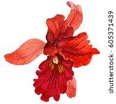 wildflower orchid flower in a... | Shutterstock . vector #605371439