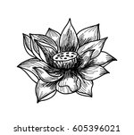 hand drawn and sketch lotus... | Shutterstock .eps vector #605396021