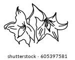 hand drawn solanum flower | Shutterstock .eps vector #605397581