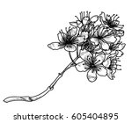 hand drawn peach blossom or... | Shutterstock .eps vector #605404895