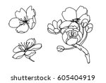hand drawn peach blossom or... | Shutterstock .eps vector #605404919