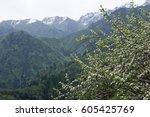mountains and trees | Shutterstock . vector #605425769