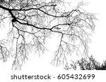 realistic birch tree branches...   Shutterstock . vector #605432699