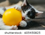 Stock photo cute kitten cat pet small domestic animal with whiskers and furry coat black and white playing 605450825