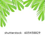 green palm leaves isolated on... | Shutterstock . vector #605458829