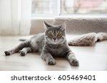 Cute Tabby Cat Lying On Floor...