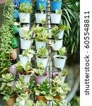 vertical garden on wall of... | Shutterstock . vector #605548811