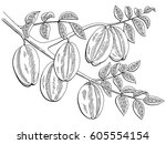 carambola fruit graphic branch... | Shutterstock .eps vector #605554154