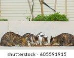 Cat Eating Outside.