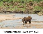 large african elephant ... | Shutterstock . vector #605594561