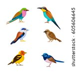 Stock vector a set of colorful birds isolated vector illustration 605606645