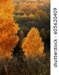 birch forest | Shutterstock . vector #605620409