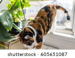 Stock photo cat going jumping down from windowsill by plants 605651087