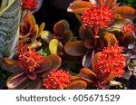 beautiful red mini flowers in...