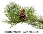 Sprig Of Pine With Cones...