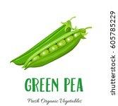 vector green pea. vegetable... | Shutterstock .eps vector #605785229