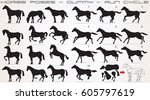 horse icon set. horses vector... | Shutterstock .eps vector #605797619