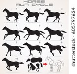 horse run cycle. hand drawn... | Shutterstock .eps vector #605797634