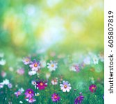 beauty summer meadow with... | Shutterstock . vector #605807819