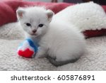 Stock photo siamese kitten 605876891