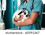 Stock photo a rabbit in for a check up at a vet clinic 60591367