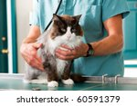 A cat having a check-up at a small animal vet clinic - stock photo
