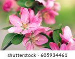 spring tree with pink flowers | Shutterstock . vector #605934461