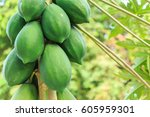 Group Of Green Papaya On The...