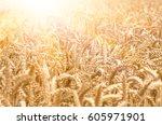 organic golden ripe ears of... | Shutterstock . vector #605971901