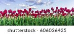 red tulip on a field in germany. | Shutterstock . vector #606036425