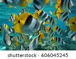 Tropical Fish Shoal Of Colorfu...