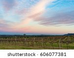 beautiful vineyard landscape at ... | Shutterstock . vector #606077381