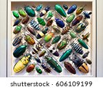 beautiful collection of beetles ... | Shutterstock . vector #606109199