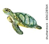 Stock photo sea green turtle isolated on white background illustration watercolor picture image 606128564