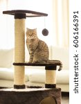 Stock photo cat sitting on a scratching post on a living room background 606166391