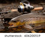 brown trout | Shutterstock . vector #606200519