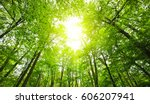 forest with tall trees and... | Shutterstock . vector #606207941
