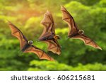 bats flying on green background | Shutterstock . vector #606215681
