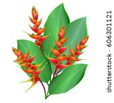 heliconia flowers  wild... | Shutterstock .eps vector #606301121