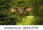 the eurasian eagle owl flying... | Shutterstock . vector #606419735
