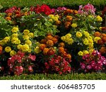 Close Up Detail Of Begonias An...
