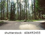 scenic forest with tall trees... | Shutterstock . vector #606492455