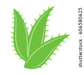 aloe vera leaves on white... | Shutterstock .eps vector #606580625