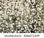 Blurry White Gypsophila Flower...