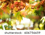 beautiful golden leaves in... | Shutterstock . vector #606756659